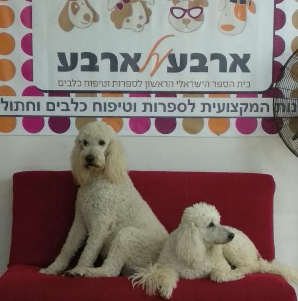 קורסים ללימודי ספרות כלבים בארבע על ארבע