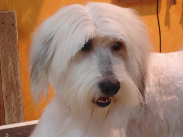 מעולה  ארבע על ארבע, מספרות כלבים,בית ספר לספרות כלבים, מספרה ניידת, קורס HN-99